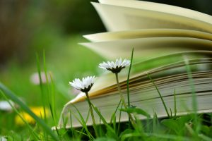 A blurred book sitting on the grass.
